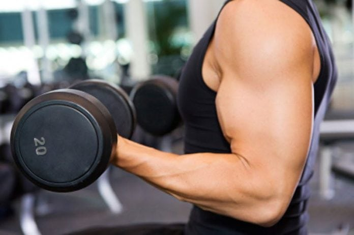 Beginners guide to muscle building