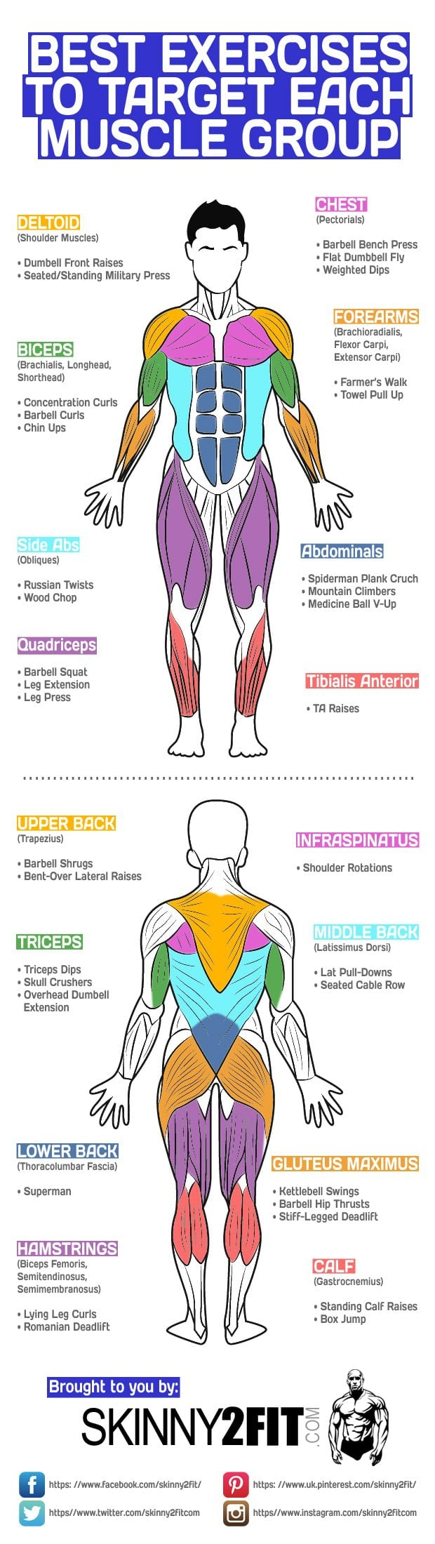Target Each Muscle Group