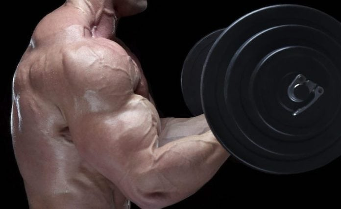 Adding an Inch to Your Arms